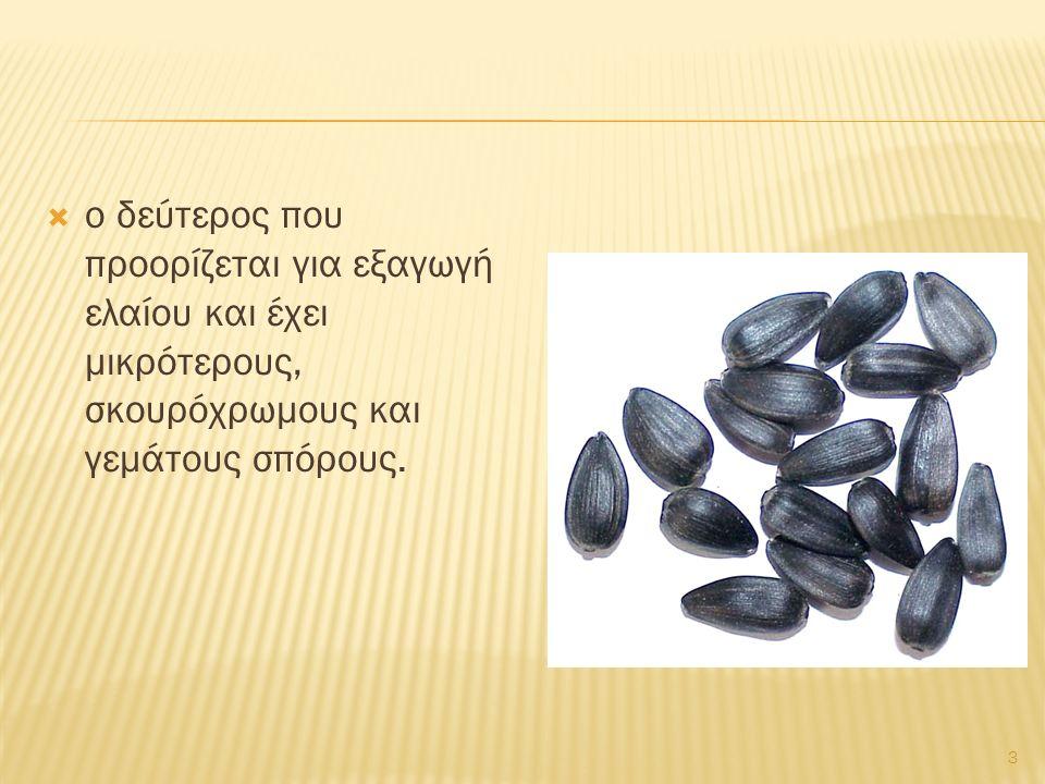  ο δεύτερος που προορίζεται για εξαγωγή ελαίου και έχει μικρότερους, σκουρόχρωμους και γεμάτους σπόρους. 3