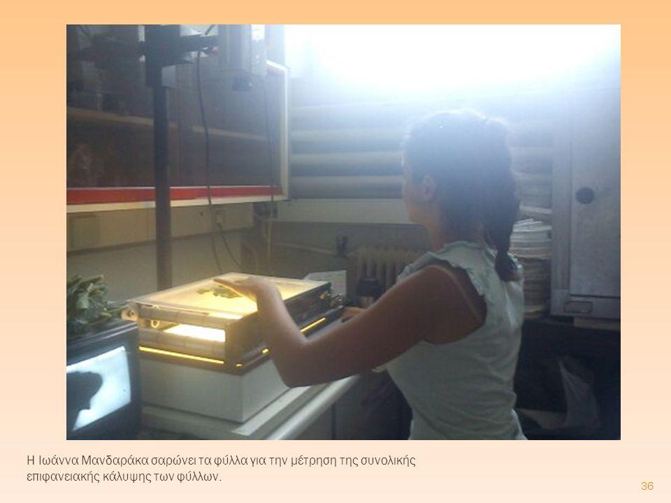 Η Ιωάννα Μανδαράκα σαρώνει τα φύλλα για την μέτρηση της συνολικής επιφανειακής κάλυψης των φύλλων. 36