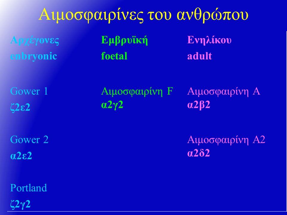Αιμοσφαιρίνες του ανθρώπου Αρχέγονες enbryonic Εμβρυϊκή foetal Eνηλίκου adult Gower 1 ζ2ε2 Αιμοσφαιρίνη F α2γ2 Αιμοσφαιρίνη Α α2β2 Gower 2 α2ε2 Αιμοσφαιρίνη Α2 α2δ2 Portland ζ2γ2