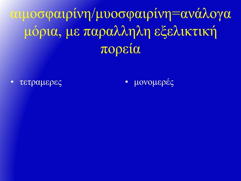 αιμοσφαιρίνη/μυοσφαιρίνη=ανάλογα μόρια, με παραλληλη εξελικτική πορεία τετραμερεςμονομερές