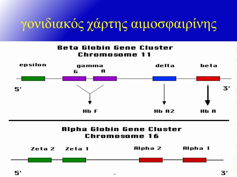 γονιδιακός χάρτης αιμοσφαιρίνης