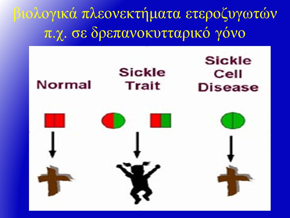 βιολογικά πλεονεκτήματα ετεροζυγωτών π.χ. σε δρεπανοκυτταρικό γόνο