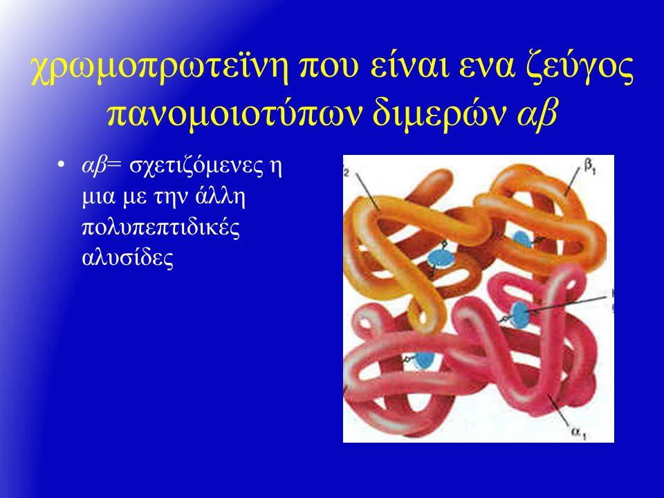 αιμοσφαιρίνη: 4 αλύσσεις σφαιρίνης ανα δύο πανομοιότυπες/ζεύγη σφαιρίνης με ένα δακτύλιο αίμης σε καθε μία