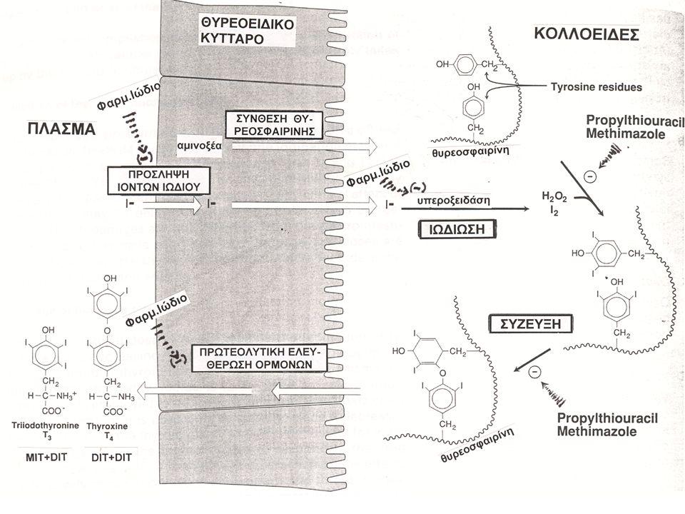 ΘΥΡΕΟΤΟΞΙΚΗ ΚΡΙΣΗ-ΟΡΙΣΜΟΣ «Απορρύθμιση» υπερθυρεοειδικής κατάστασης Απαραίτητα στοιχεία:  Υπερθερμία σε συνδυασμό με εφίδρωση  Υπερδιέγερση και ενίοτε συγχυτική κατάσταση  Σοβαρά επηρεασμένη καρδιακή λειτουργία  «Εκλυτικός» παράγοντας