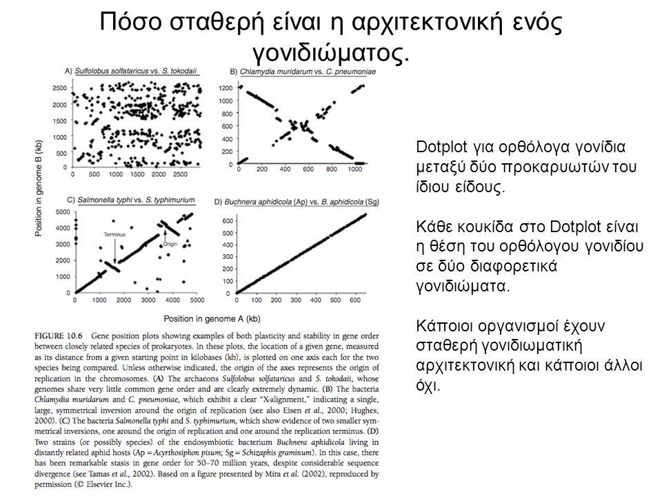Πόσο σταθερή είναι η αρχιτεκτονική ενός γονιδιώματος. Dotplot για ορθόλογα γονίδια μεταξύ δύο προκαρυωτών του ίδιου είδους. Κάθε κουκίδα στο Dotplot ε