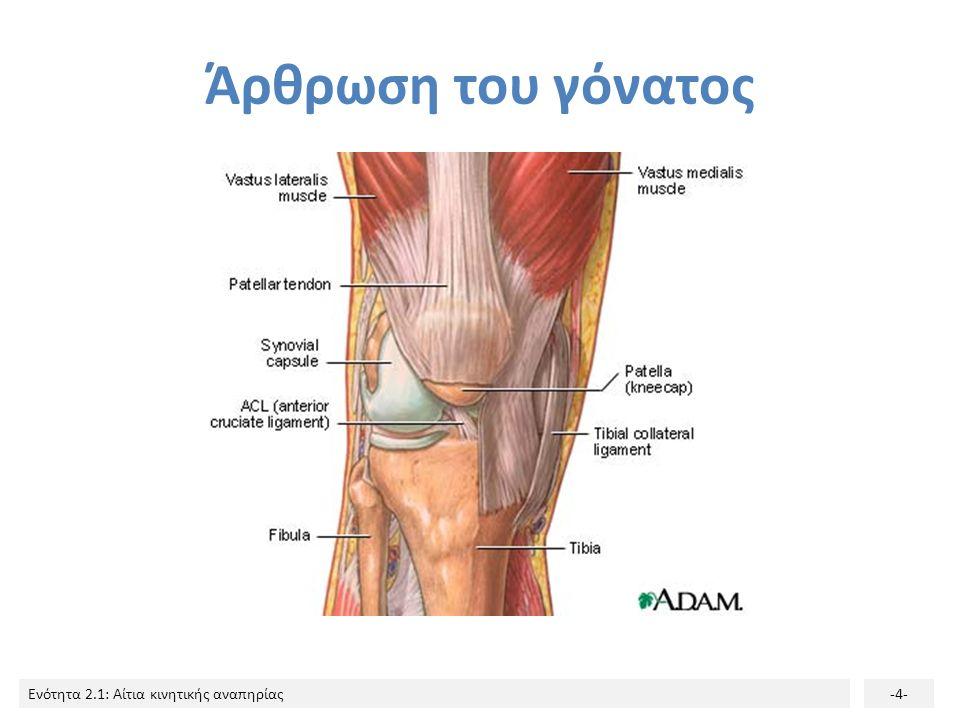 Ενότητα 2.1: Αίτια κινητικής αναπηρίας-4- Άρθρωση του γόνατος