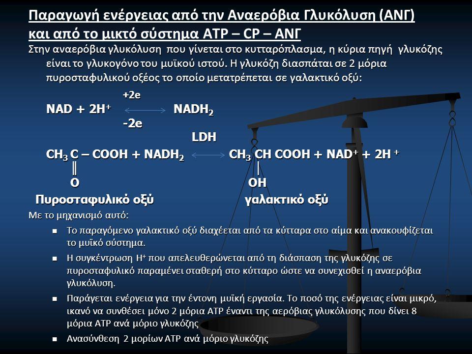 Όλη η γλυκόλυση μπορεί να παρασταθεί με την παρακάτω αντίδραση: C 6 H 12 O 6 2 CH 3 -CH(OH)-COOH + 47,0 kcal C 6 H 12 O 6 2 CH 3 -CH(OH)-COOH + 47,0 kcal Αν σ' αυτό το χρονικό διάστημα των 1,5 min το άτομο σταματήσει την παραγωγή έντονου μυϊκού έργου ο οργανισμός μετατρέπει το γαλακτικό οξύ σε γλυκογόνο για μελλοντική κατανάλωση και παραγωγή ενέργειας.
