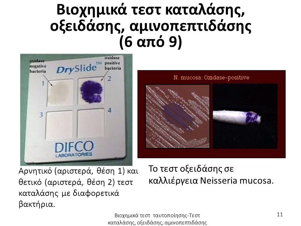 Βιοχημικά τεστ καταλάσης, οξειδάσης, αμινοπεπτιδάσης (6 από 9) Αρνητικό (αριστερά, θέση 1) και θετικό (αριστερά, θέση 2) τεστ καταλάσης με διαφορετικά βακτήρια.