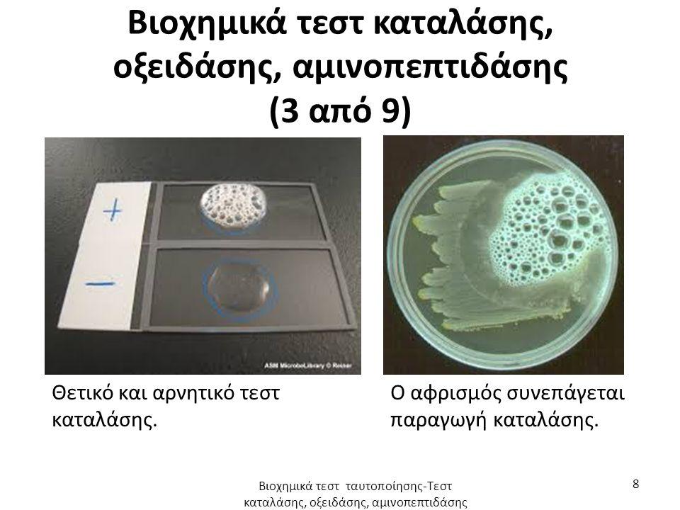 Βιοχημικά τεστ καταλάσης, οξειδάσης, αμινοπεπτιδάσης (4 από 9) Το τεστ οξειδάσης είναι ένα παρόμοιο τεστ που αφορά ένα άλλο ένζυμο που εμπλέκεται σε οξειδωτικές αντιδράσεις και παράγεται από ορισμένους μικροοργανισμούς, την οξειδάση του κυτοχρώματος c.