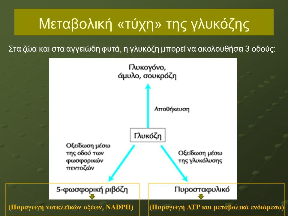 Μεταβολική «τύχη» της γλυκόζης (Παραγωγή ΑΤΡ και μεταβολικά ενδιάμεσα)(Παραγωγή νουκλεϊκών οξέων, ΝΑDPH) Στα ζώα και στα αγγειώδη φυτά, η γλυκόζη μπορεί να ακολουθήσει 3 οδούς:
