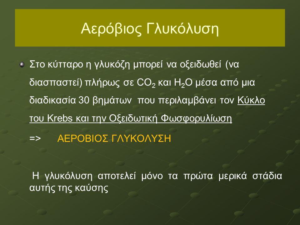 Αερόβιος Γλυκόλυση Στο κύτταρο η γλυκόζη μπορεί να οξειδωθεί (να διασπαστεί) πλήρως σε CO 2 και H 2 O μέσα από μια διαδικασία 30 βημάτων που περιλαμβά