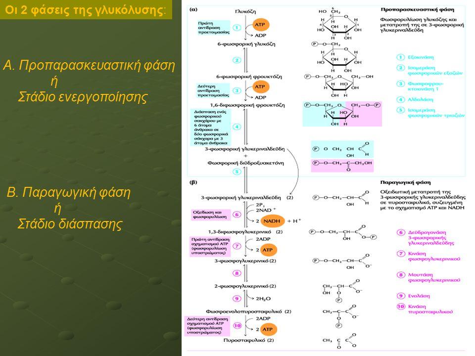 Α. Προπαρασκευαστική φάση ή Στάδιο ενεργοποίησης Β. Παραγωγική φάση ή Στάδιο διάσπασης Οι 2 φάσεις της γλυκόλυσης: