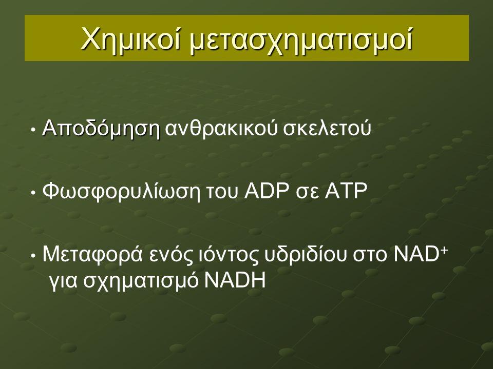 Χημικοί μετασχηματισμοί Αποδόμηση Αποδόμηση ανθρακικού σκελετού Φωσφορυλίωση του ADP σε ATP Μεταφορά ενός ιόντος υδριδίου στο NAD + για σχηματισμό NADH