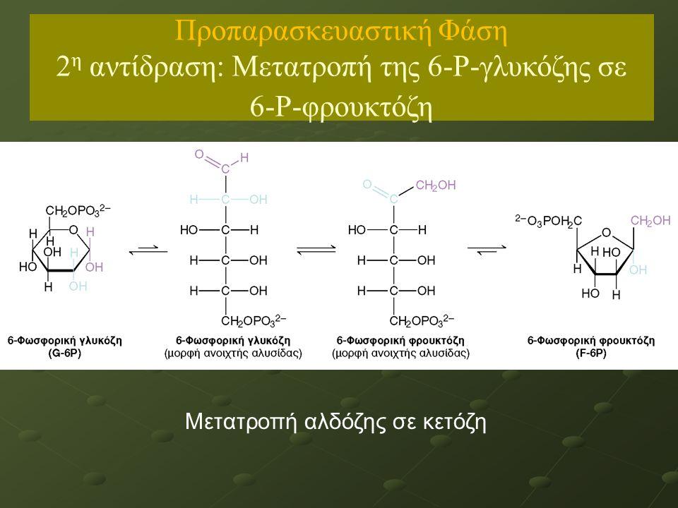 Μετατροπή αλδόζης σε κετόζη Προπαρασκευαστική Φάση 2 η αντίδραση: Μετατροπή της 6-Ρ-γλυκόζης σε 6-Ρ-φρουκτόζη