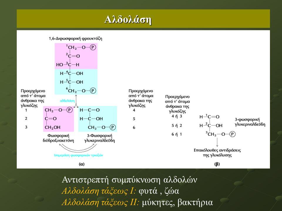 Αλδολάση Αντιστρεπτή συμπύκνωση αλδολών Αλδολάση τάξεως Ι: φυτά, ζώα Αλδολάση τάξεως ΙΙ: μύκητες, βακτήρια