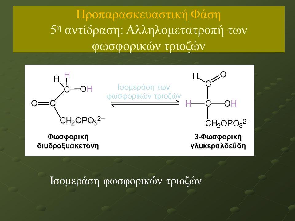 Ισομεράση φωσφορικών τριοζών Προπαρασκευαστική Φάση 5 η αντίδραση: Αλληλομετατροπή των φωσφορικών τριοζών