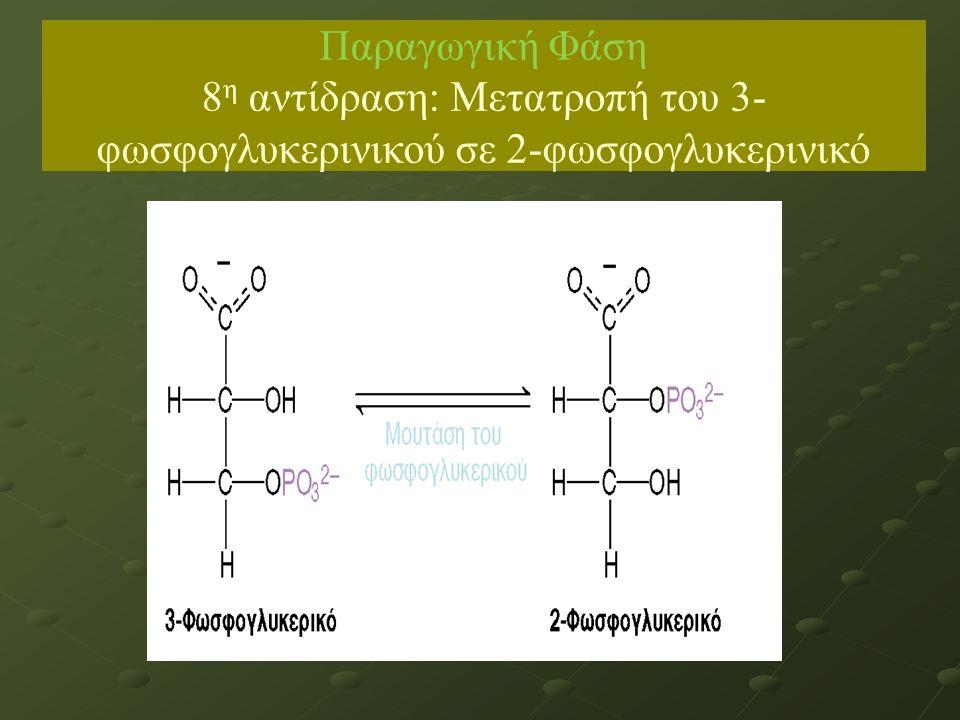 Παραγωγική Φάση 8 η αντίδραση: Μετατροπή του 3- φωσφογλυκερινικού σε 2-φωσφογλυκερινικό ΙΙΙΙΙΙ