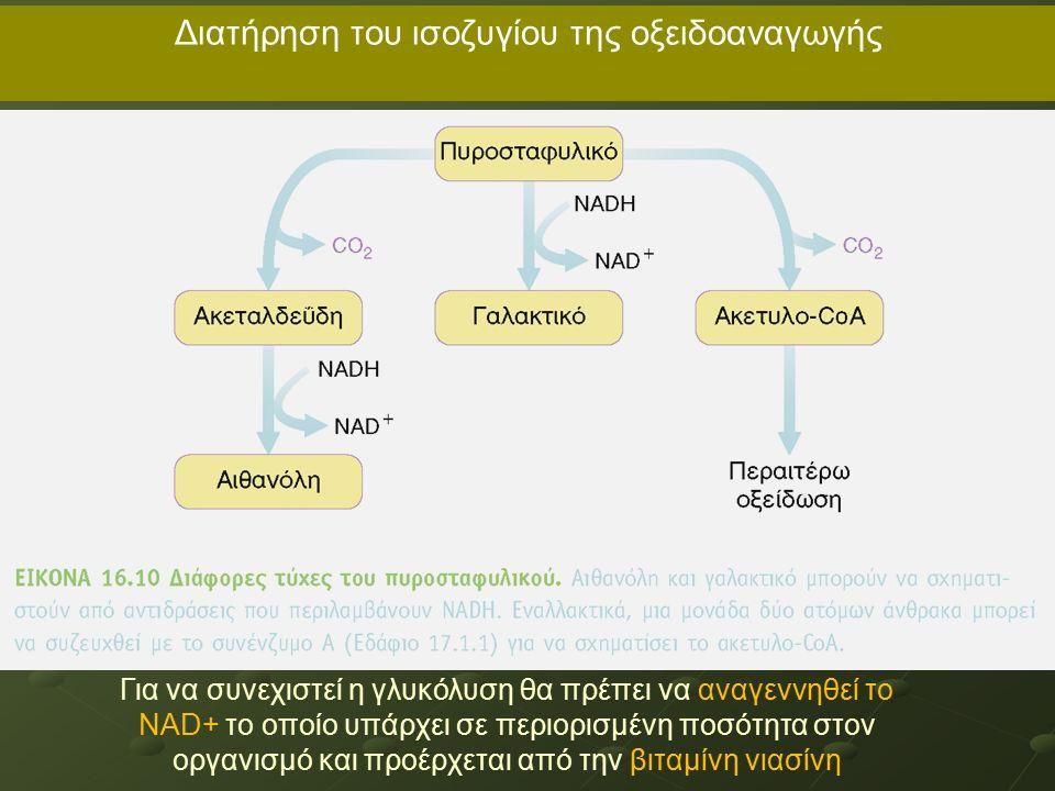 Διατήρηση του ισοζυγίου της οξειδοαναγωγής Για να συνεχιστεί η γλυκόλυση θα πρέπει να αναγεννηθεί το NAD+ το οποίο υπάρχει σε περιορισμένη ποσότητα στον οργανισμό και προέρχεται από την βιταμίνη νιασίνη