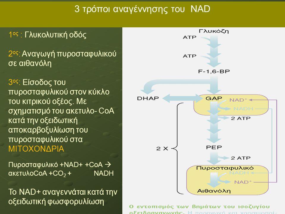 3 τρόποι αναγέννησης του NAD 1 ος : Γλυκολυτική οδός 2 ος : Αναγωγή πυροσταφυλικού σε αιθανόλη 3 ος : Είσοδος του πυροσταφυλικού στον κύκλο του κιτρικού οξέος.