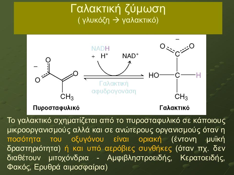 Το γαλακτικό σχηματίζεται από το πυροσταφυλικό σε κάποιους μικροοργανισμούς αλλά και σε ανώτερους οργανισμούς όταν η ποσότητα του οξυγόνου είναι οριακ