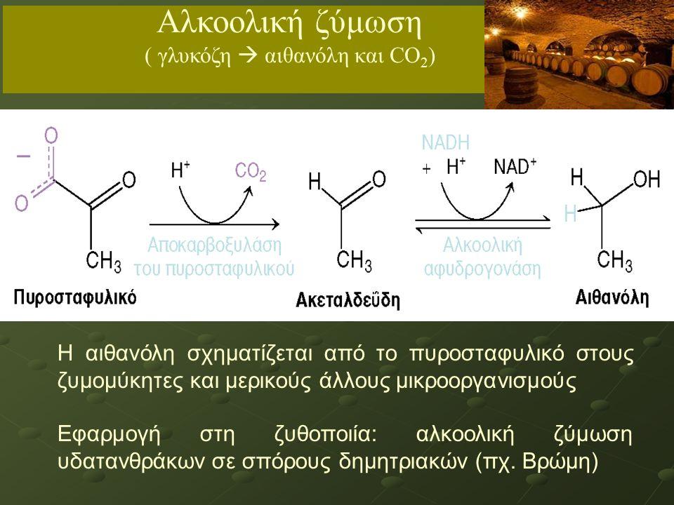 Η αιθανόλη σχηματίζεται από το πυροσταφυλικό στους ζυμομύκητες και μερικούς άλλους μικροοργανισμούς Εφαρμογή στη ζυθοποιία: αλκοολική ζύμωση υδατανθράκων σε σπόρους δημητριακών (πχ.