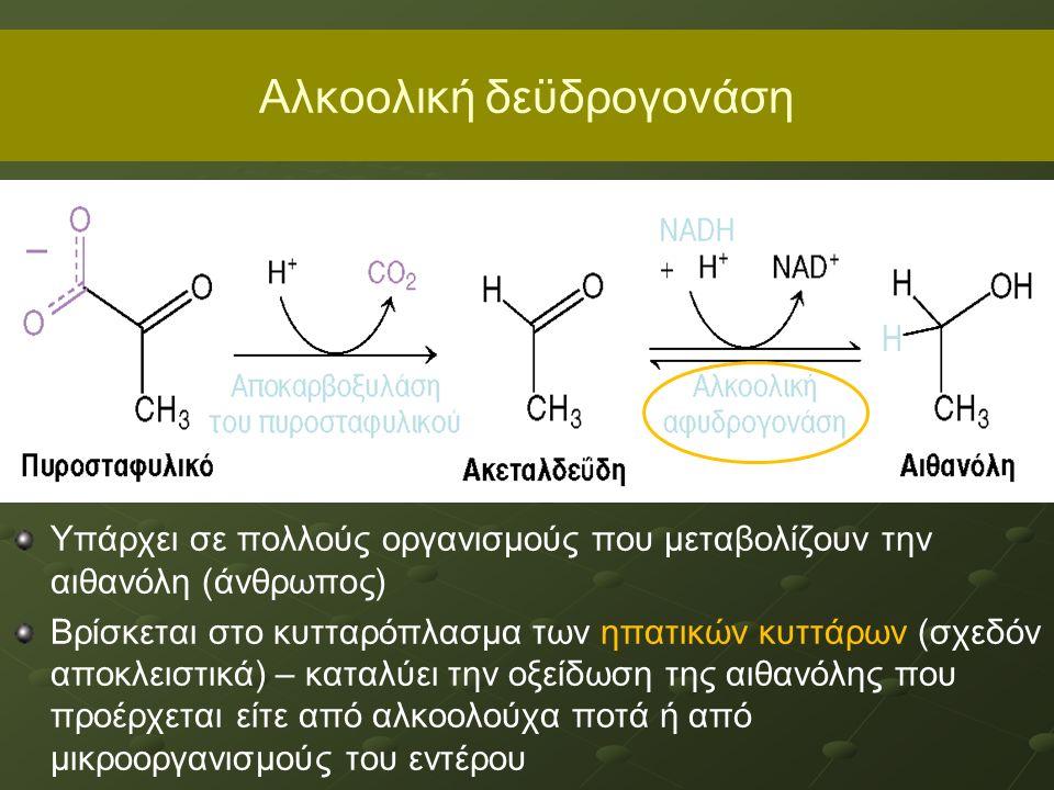 Aλκοολική δεϋδρογονάση Υπάρχει σε πολλούς οργανισμούς που μεταβολίζουν την αιθανόλη (άνθρωπος) Βρίσκεται στο κυτταρόπλασμα των ηπατικών κυττάρων (σχεδόν αποκλειστικά) – καταλύει την οξείδωση της αιθανόλης που προέρχεται είτε από αλκοολούχα ποτά ή από μικροοργανισμούς του εντέρου