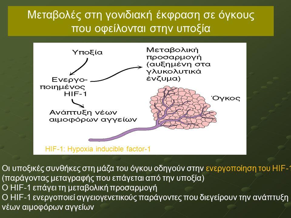 Οι υποξικές συνθήκες στη μάζα του όγκου οδηγούν στην ενεργοποίηση του ΗΙF-1 (παράγοντας μεταγραφής που επάγεται από την υποξία) Ο ΗΙF-1 επάγει τη μεταβολική προσαρμογή Ο ΗΙF-1 ενεργοποιεί αγγειογενετικούς παράγοντες που διεγείρουν την ανάπτυξη νέων αιμοφόρων αγγείων Μεταβολές στη γονιδιακή έκφραση σε όγκους που οφείλονται στην υποξία HIF-1: Hypoxia inducible factor-1