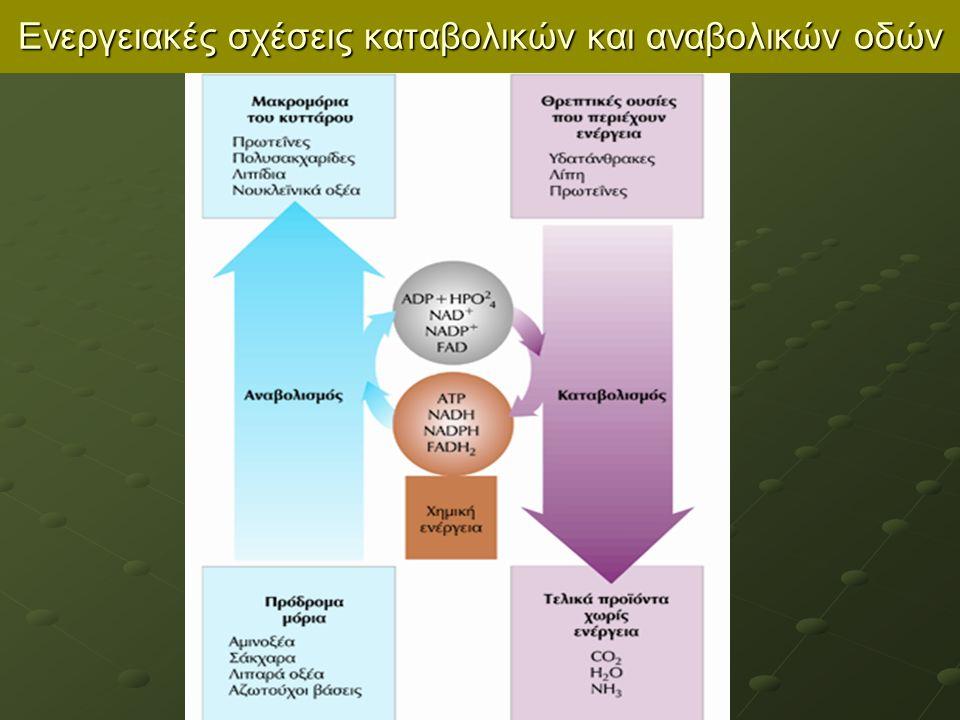 Ζυμώσεις Αποδίδουν ποικίλα κοινά τρόφιμα αλλά και βιομηχανικές χημικές ουσίες Lactobacillus Bulgarius Ζύμωση γάλακτος  Γαλακτικό οξύ pH χαμηλό  καθίζηση πρωτεϊνών  γιαούρτι πηκτό Propionibacterium freudenreichi Ζύμωση γάλακτος  προπιονικό οξύ και CO 2 (τυρί Εmental) - Πτώση pH συνοδεύει τη ζύμωση, διατήρηση τροφίμων αναλλοίωτα από βακτήρια (πχ.