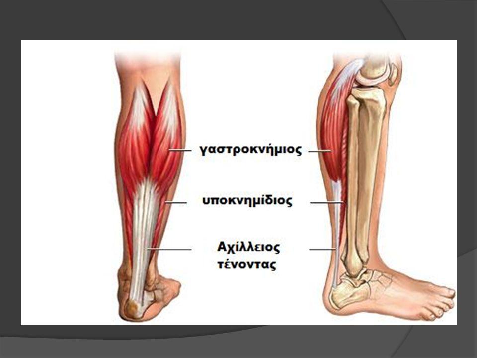 Γαστροκνήμιος μυς Ενέργεια Συμμετέχει αποφασιστικά στην πελματιαία κάμψη του άκρου ποδιού(τρέξιμο, άλματα) καθώς σηκώνει την πτέρνα από το έδαφος και προετοιμάζει μια ισχυρή ώθηση από την ποδοκνημική.