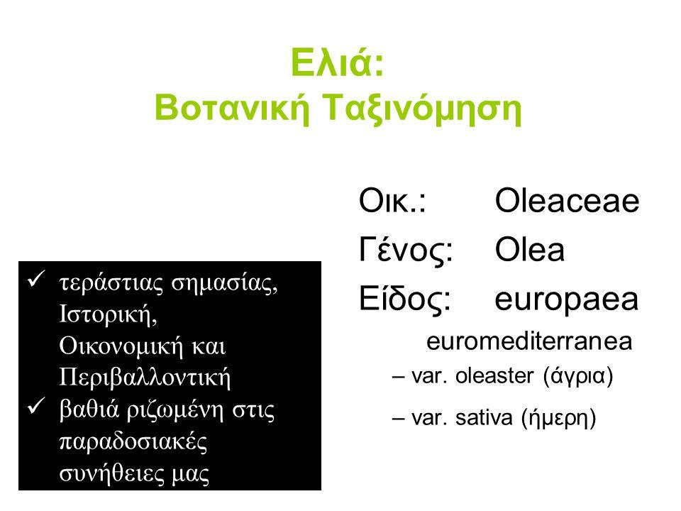 Ελιά: Βοτανική Ταξινόμηση Οικ.: Oleaceae Γένος: Olea Είδος: europaea euromediterranea – var.