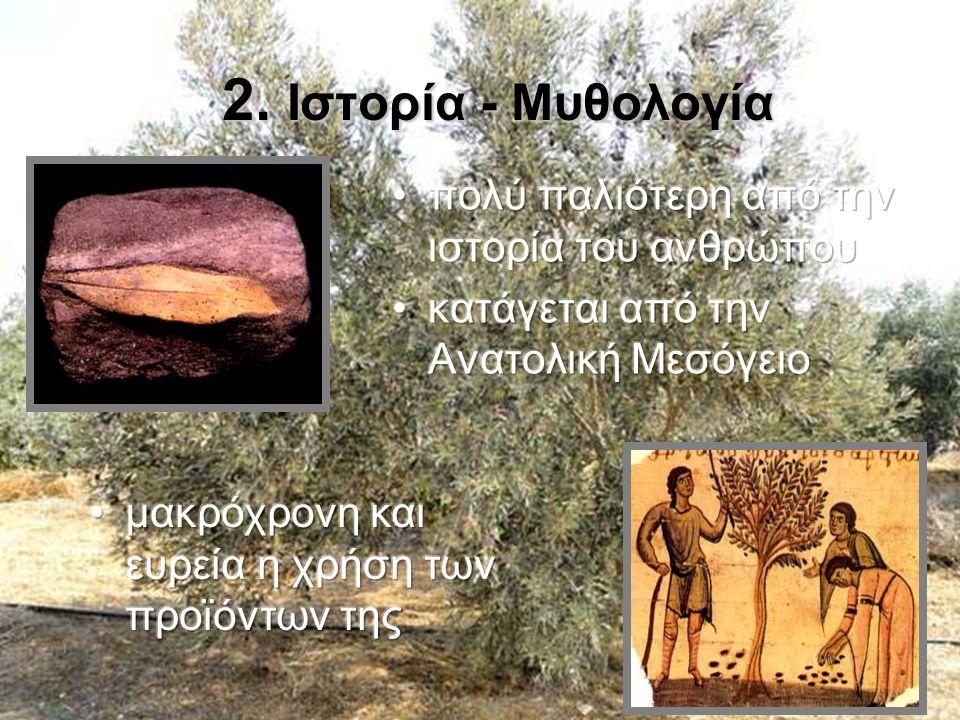 Το πιο χαρακτηριστικό δέντρο της Μεσογείου Το πιο χαρακτηριστικό δέντρο της Μεσογείου Κοντά στη θάλασσα Κοντά στη θάλασσα Άριστα δεμένη με αειφόρο ανάπτυξηΆριστα δεμένη με αειφόρο ανάπτυξη Πολυδιάστατη γεωργίαΠολυδιάστατη γεωργία 3.