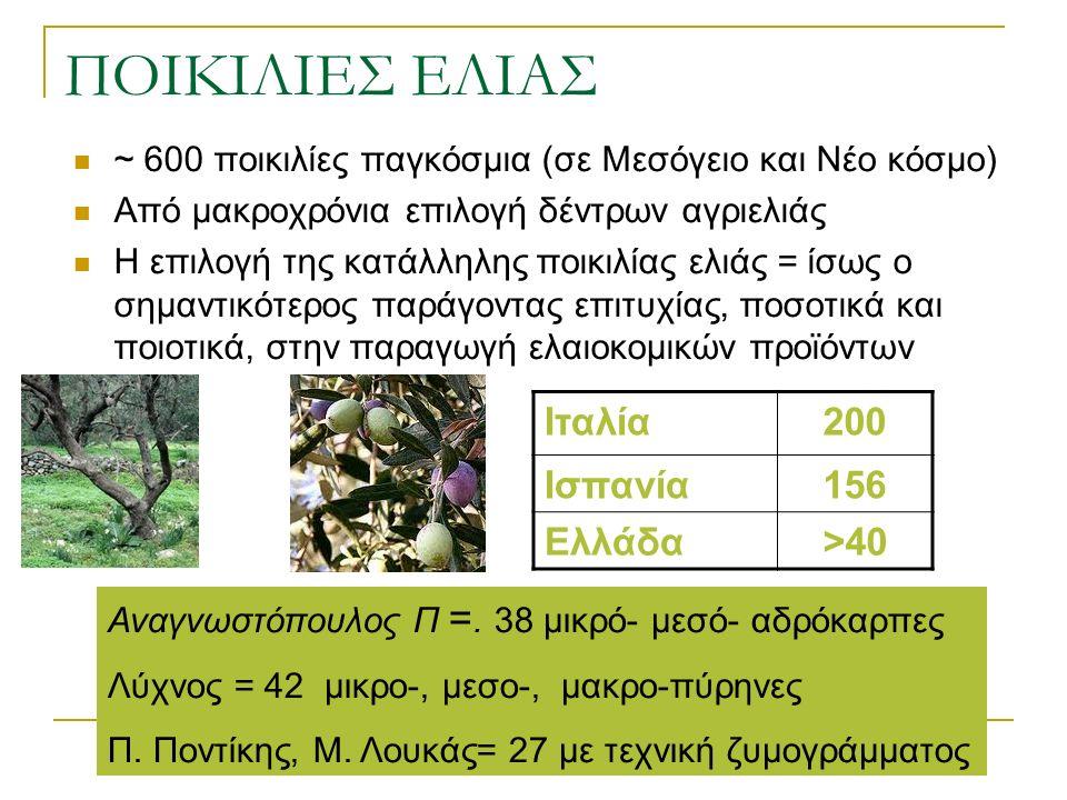 ΠΟΙΚΙΛΙΕΣ ΕΛΙΑΣ ~ 600 ποικιλίες παγκόσμια (σε Μεσόγειο και Νέο κόσμο) Από μακροχρόνια επιλογή δέντρων αγριελιάς Η επιλογή της κατάλληλης ποικιλίας ελιάς = ίσως ο σημαντικότερος παράγοντας επιτυχίας, ποσοτικά και ποιοτικά, στην παραγωγή ελαιοκομικών προϊόντων Ιταλία200 Ισπανία156 Ελλάδα>40 Αναγνωστόπουλος Π =.
