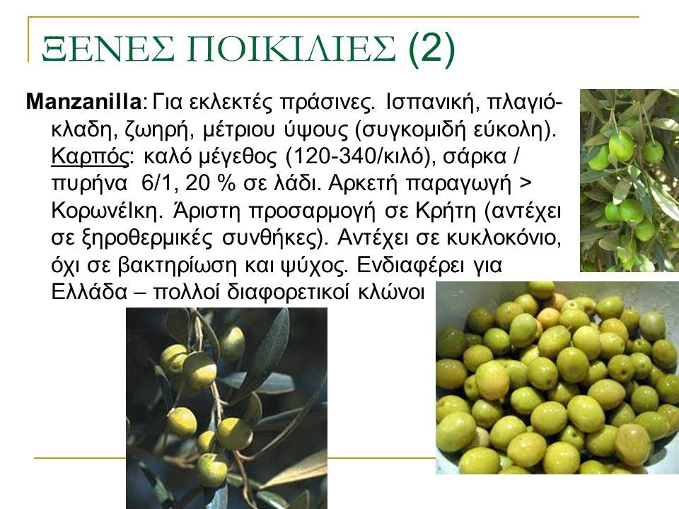 ΞΕΝΕΣ ΠΟΙΚΙΛΙΕΣ (2) Manzanilla: Για εκλεκτές πράσινες. Ισπανική, πλαγιό- κλαδη, ζωηρή, μέτριου ύψους (συγκομιδή εύκολη). Καρπός: καλό μέγεθος (120-340