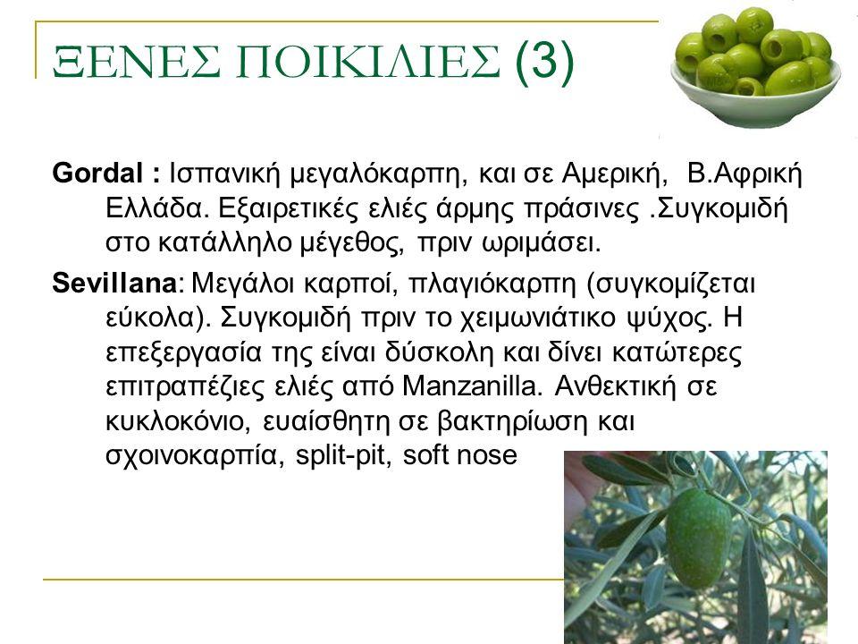 ΞΕΝΕΣ ΠΟΙΚΙΛΙΕΣ (3) Gordal : Ισπανική μεγαλόκαρπη, και σε Αμερική, Β.Αφρική Ελλάδα. Εξαιρετικές ελιές άρμης πράσινες.Συγκομιδή στο κατάλληλο μέγεθος,