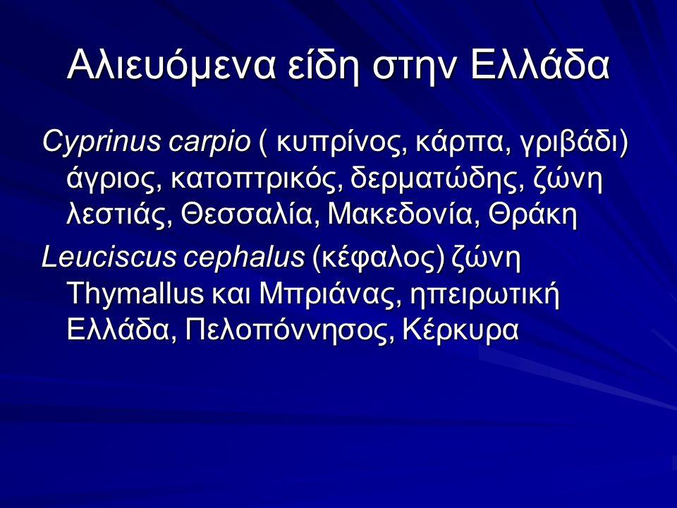 Αλιευόμενα είδη στην Ελλάδα Cyprinus carpio ( κυπρίνος, κάρπα, γριβάδι) άγριος, κατοπτρικός, δερματώδης, ζώνη λεστιάς, Θεσσαλία, Μακεδονία, Θράκη Leuciscus cephalus (κέφαλος) ζώνη Thymallus και Μπριάνας, ηπειρωτική Ελλάδα, Πελοπόννησος, Κέρκυρα