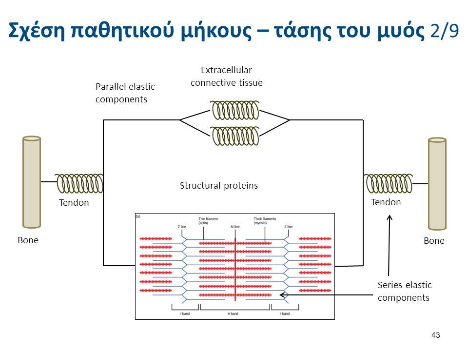 Σχέση παθητικού μήκους – τάσης του μυός 2/9 43 Extracellular connective tissue Parallel elastic components Tendon Bone Tendon Bone Structural proteins