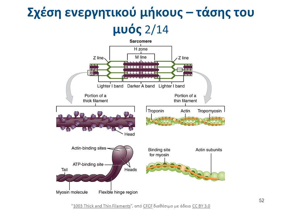 """Σχέση ενεργητικού μήκους – τάσης του μυός 2/14 52 """"1003 Thick and Thin Filaments"""", από CFCF διαθέσιμο με άδεια CC BY 3.01003 Thick and Thin FilamentsC"""