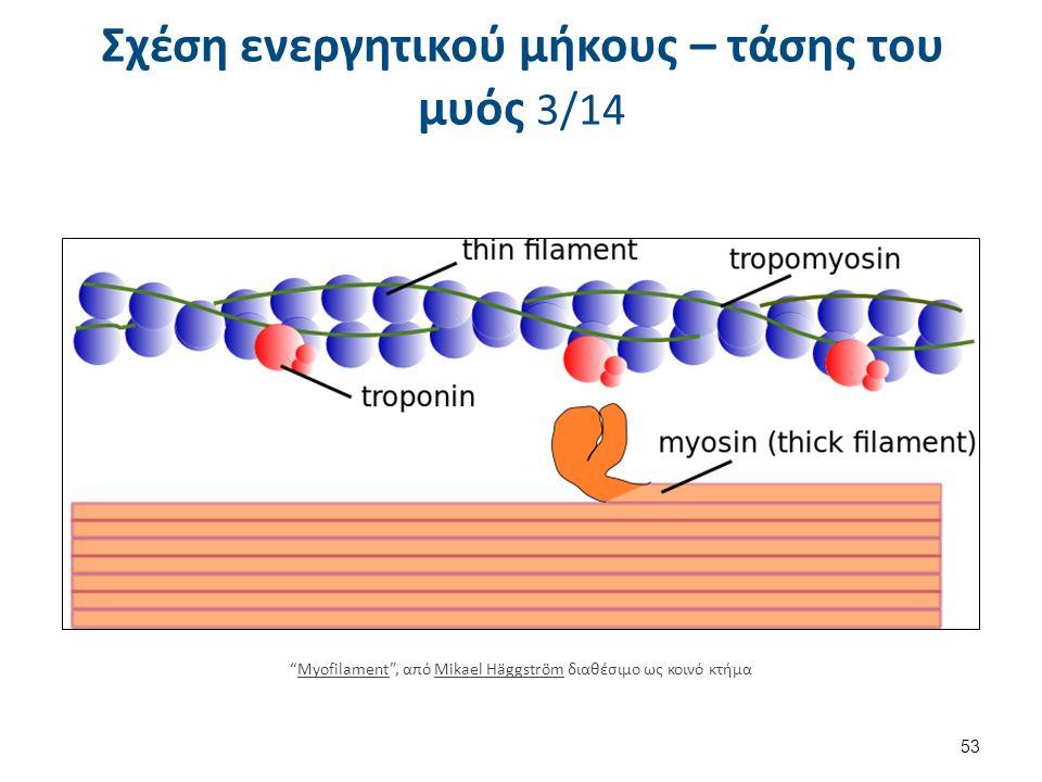 "53 ""Myofilament"", από Mikael Häggström διαθέσιμο ως κοινό κτήμαMyofilamentMikael Häggström Σχέση ενεργητικού μήκους – τάσης του μυός 3/14"