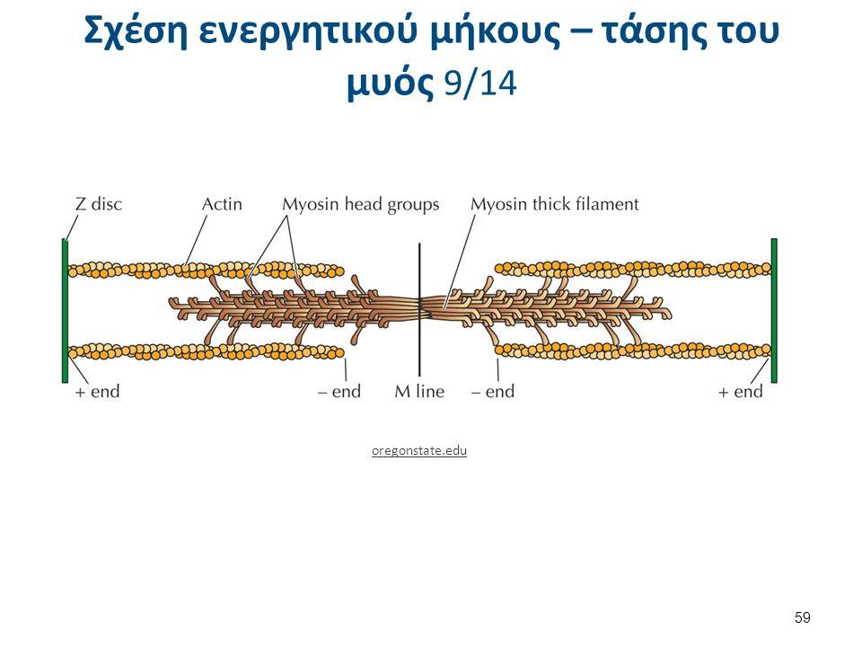 Σχέση ενεργητικού μήκους – τάσης του μυός 9/14 59 oregonstate.edu