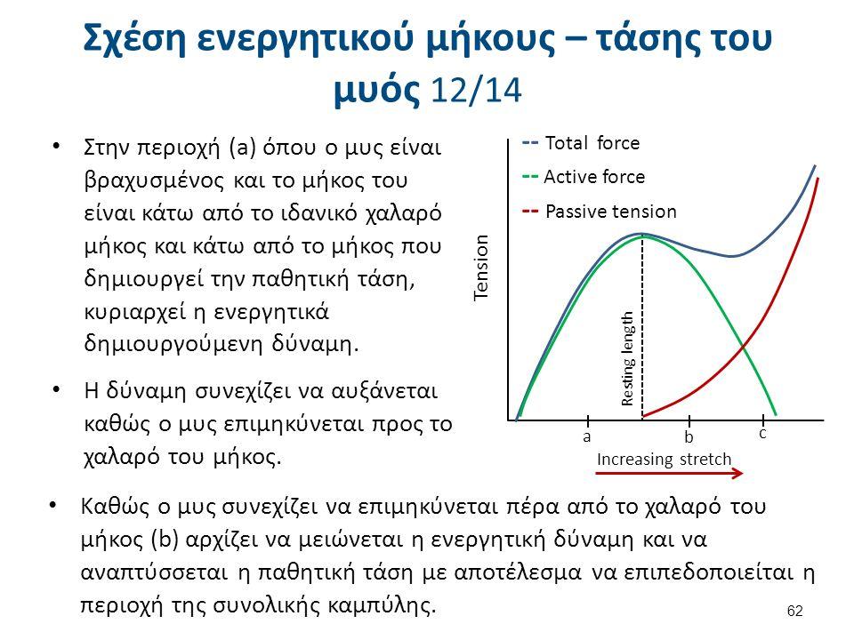 Σχέση ενεργητικού μήκους – τάσης του μυός 12/14 Στην περιοχή (a) όπου ο μυς είναι βραχυσμένος και το μήκος του είναι κάτω από το ιδανικό χαλαρό μήκος