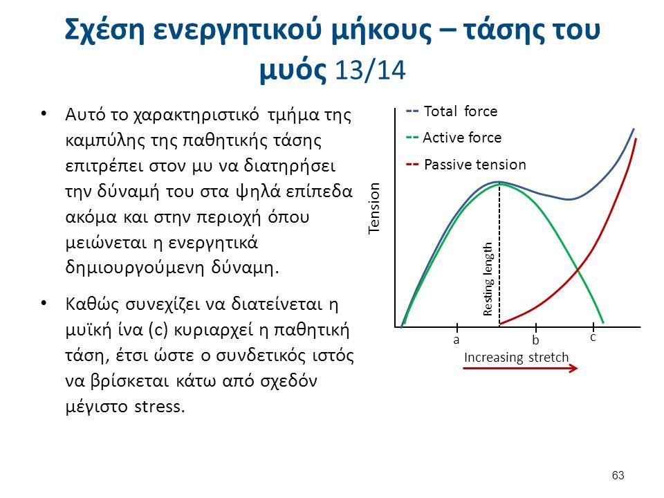 Σχέση ενεργητικού μήκους – τάσης του μυός 13/14 Αυτό το χαρακτηριστικό τμήμα της καμπύλης της παθητικής τάσης επιτρέπει στον μυ να διατηρήσει την δύνα