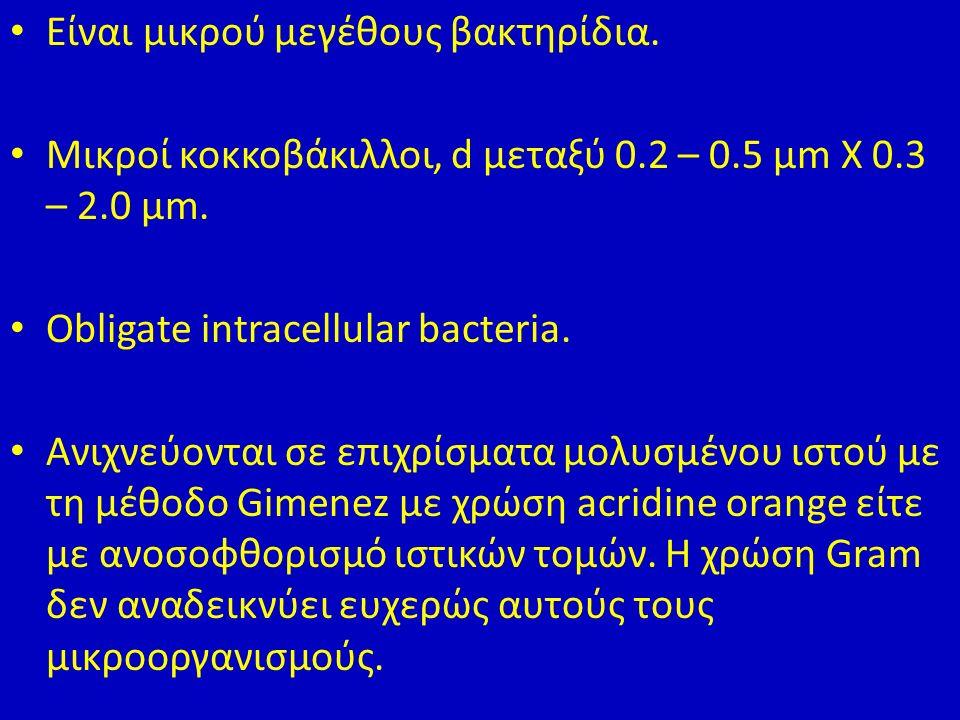 Είναι μικρού μεγέθους βακτηρίδια. Μικροί κοκκοβάκιλλοι, d μεταξύ 0.2 – 0.5 μm Χ 0.3 – 2.0 μm.