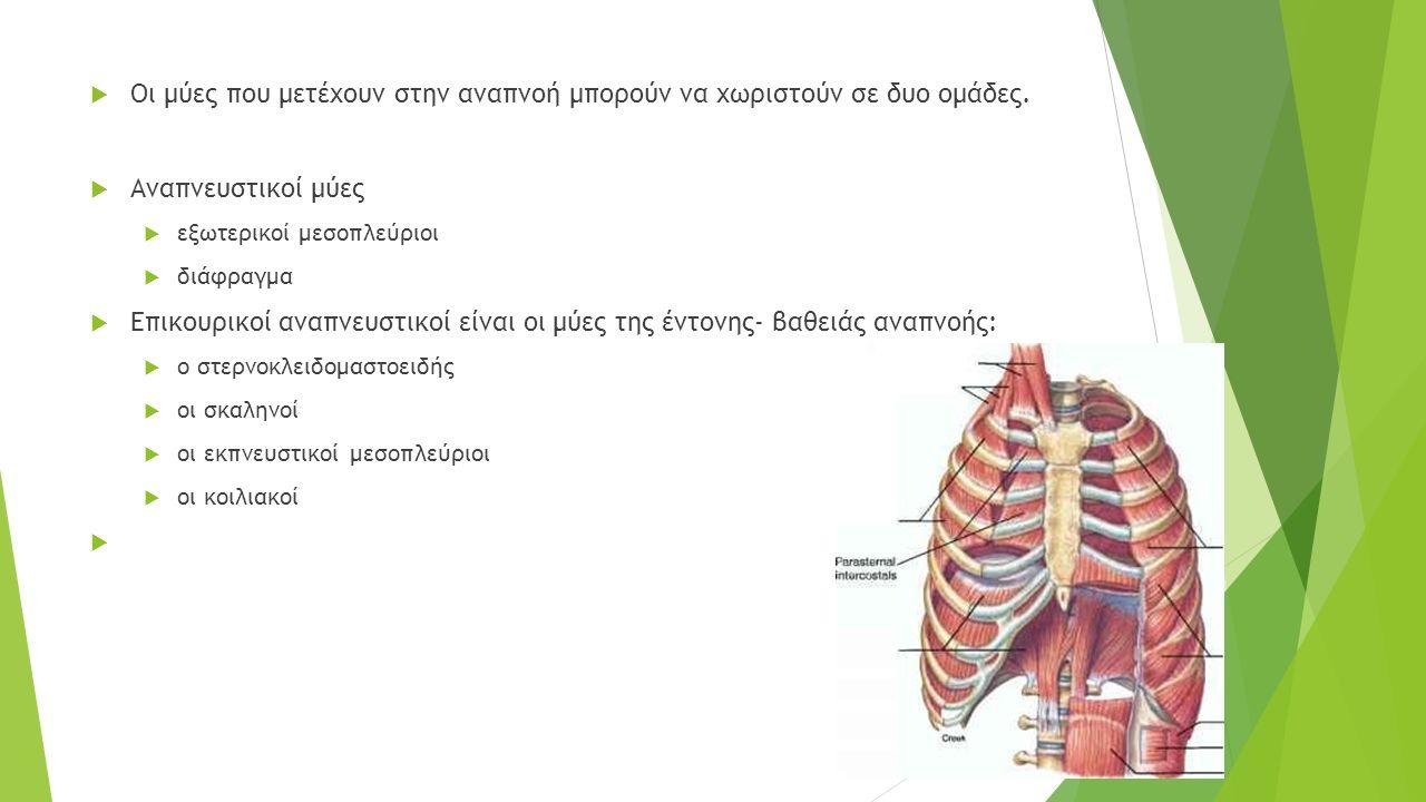  Οι μύες που μετέχουν στην αναπνοή μπορούν να χωριστούν σε δυο ομάδες.  Αναπνευστικοί μύες  εξωτερικοί μεσοπλεύριοι  διάφραγμα  Επικουρικοί αναπν
