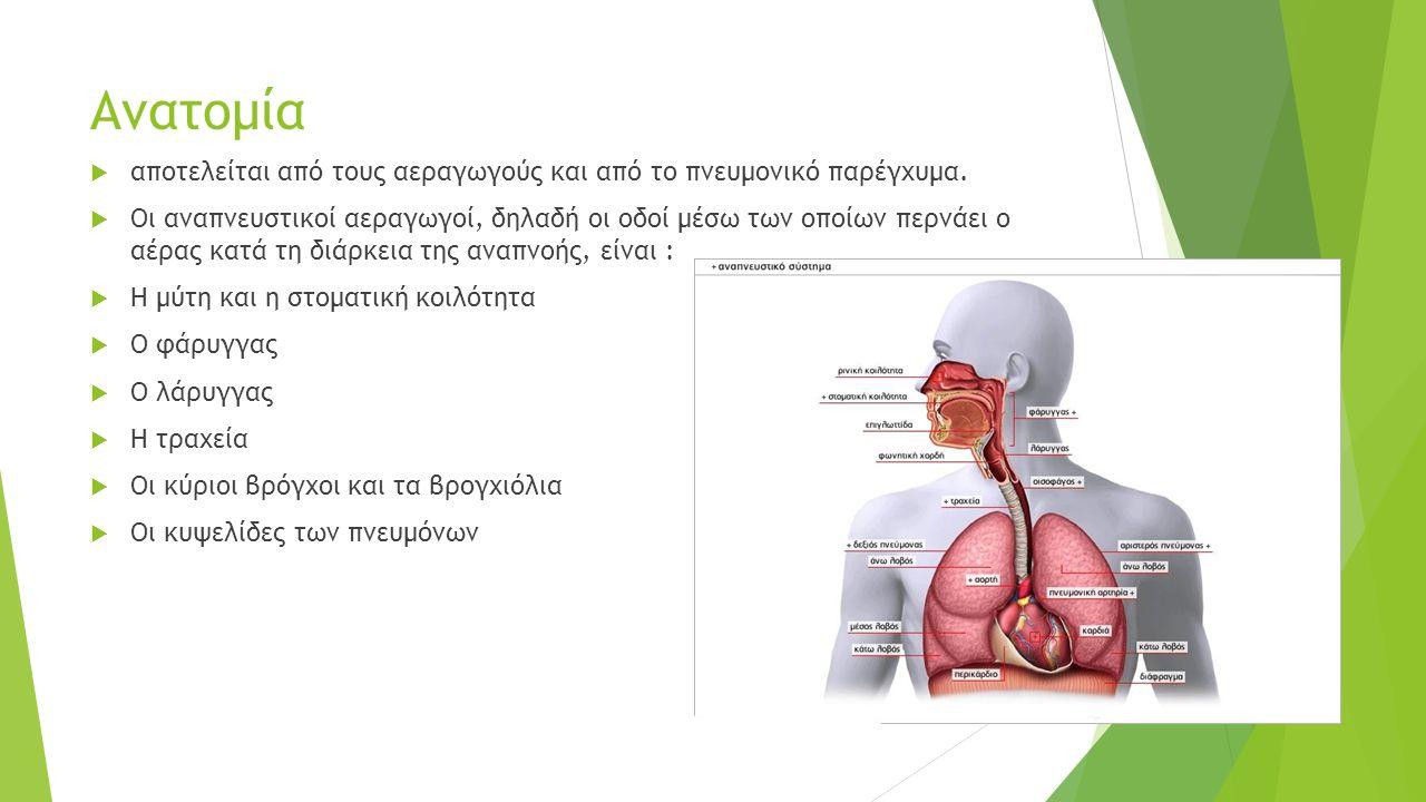 Ανατομία  αποτελείται από τους αεραγωγούς και από το πνευμονικό παρέγχυμα.  Οι αναπνευστικοί αεραγωγοί, δηλαδή οι οδοί μέσω των οποίων περνάει ο αέρ
