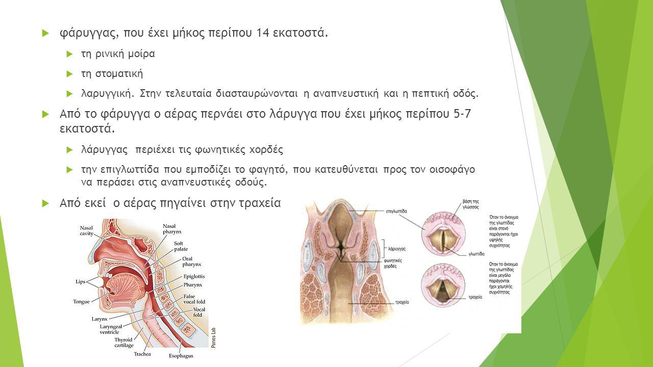  φάρυγγας, που έχει μήκος περίπου 14 εκατοστά.  τη ρινική μοίρα  τη στοματική  λαρυγγική. Στην τελευταία διασταυρώνονται η αναπνευστική και η πεπτ