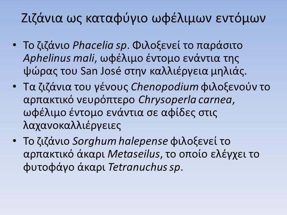 Ζιζάνια ως καταφύγιο ωφέλιμων εντόμων Το ζιζάνιο Phacelia sp. Φιλοξενεί το παράσιτο Aphelinus mali, ωφέλιμο έντομο ενάντια της ψώρας του San José στην