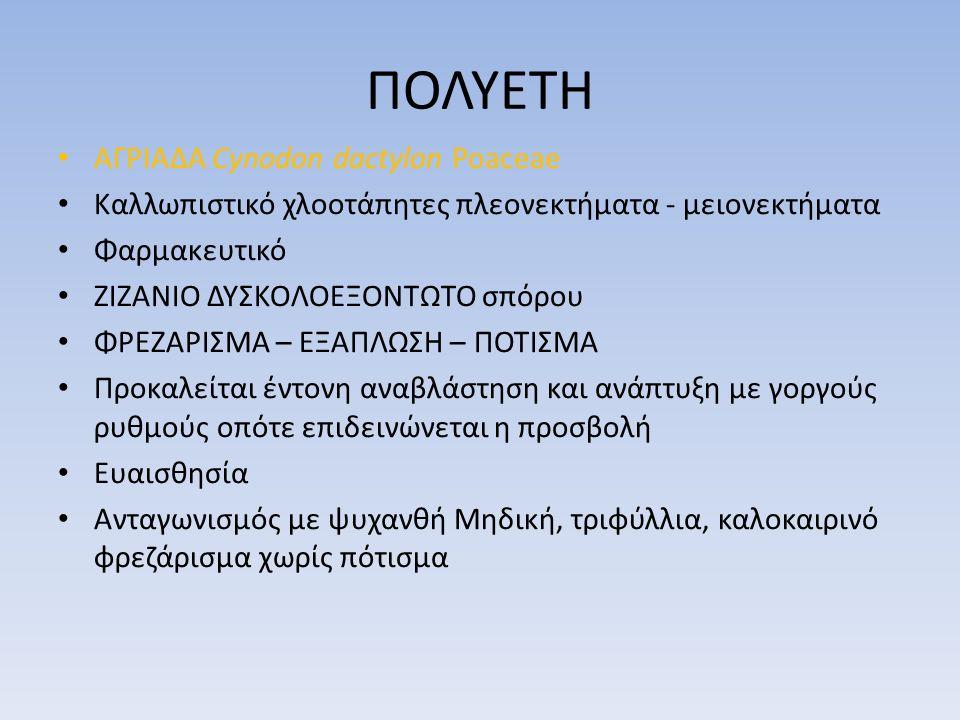 ΠΟΛΥΕΤΗ ΑΓΡΙΑΔΑ Cynodon dactylon Poaceae Καλλωπιστικό χλοοτάπητες πλεονεκτήματα - μειονεκτήματα Φαρμακευτικό ΖΙΖΑΝΙΟ ΔΥΣΚΟΛΟΕΞΟΝΤΩΤΟ σπόρου ΦΡΕΖΑΡΙΣΜΑ