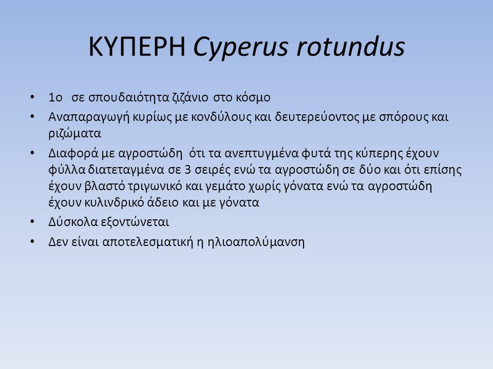 ΚΥΠΕΡΗ Cyperus rotundus 1o σε σπουδαιότητα ζιζάνιο στο κόσμο Αναπαραγωγή κυρίως με κονδύλους και δευτερεύοντος με σπόρους και ριζώματα Διαφορά με αγρο