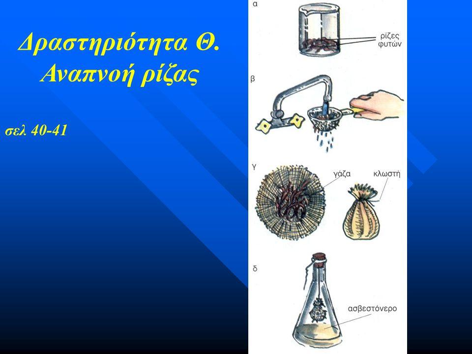 Σημασία ξυλωδών σωλήνων (α) μεταφορά νερού και αλάτων από τη ρίζα στο βλαστό. (β) στήριξη του φυτού