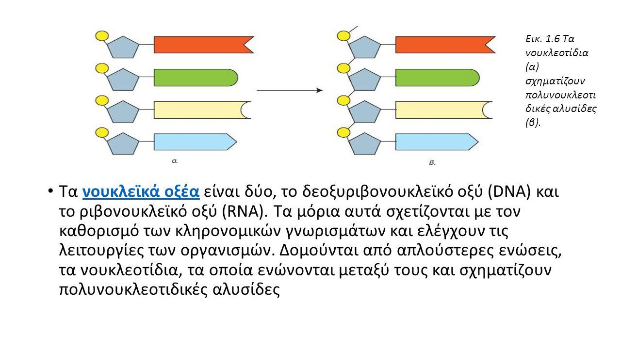 Τα νουκλεϊκά οξέα είναι δύο, το δεοξυριβονουκλεϊκό οξύ (DNA) και το ριβονουκλεϊκό οξύ (RNA).
